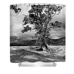 The Cazneaux Tree Shower Curtain by Bill Robinson