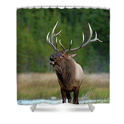 Shower Curtain featuring the photograph The Challenger by Sandra Bronstein