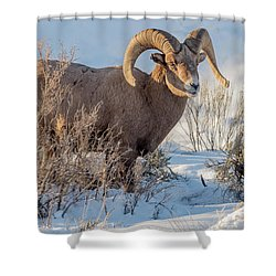 The Christmas Gift Shower Curtain