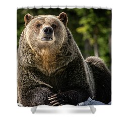 The Grizzly Bear Grinder Shower Curtain