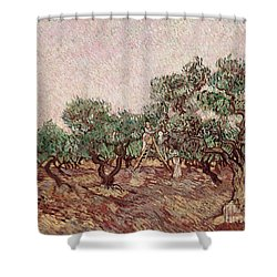 The Olive Pickers Shower Curtain by Vincent van Gogh
