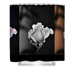 The Rose Shower Curtain by Clayton Bruster