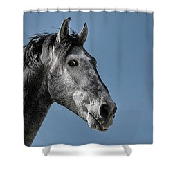 The Stallion Shower Curtain