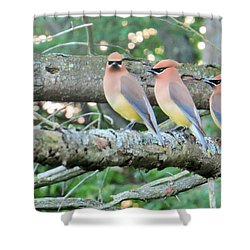 Three In A Row Shower Curtain by Jeanette Oberholtzer