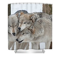 Three Wolves Are A Crowd Shower Curtain by Gary Slawsky