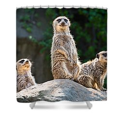 Three's Company Shower Curtain