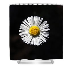 Tidy Fleabane Shower Curtain by Charles Ables
