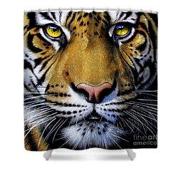 Tiger  Shower Curtain by Jurek Zamoyski