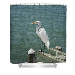 Tranquility Shower Curtain by Val Oconnor
