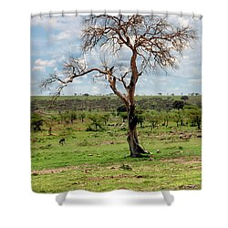 Shower Curtain featuring the photograph Tree by Charuhas Images