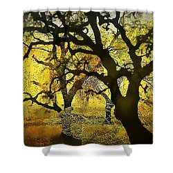 Tree Deconstructed 5 Shower Curtain by Lynda Payton