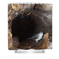 Tufted Titmouse In A Log Shower Curtain by Ted Kinsman