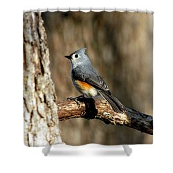 Tufted Titmouse On Branch Shower Curtain