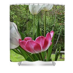 Shower Curtain featuring the photograph Tulips by Bonnie Willis