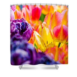Shower Curtain featuring the photograph Tulips Enchanting 39 by Alexander Senin