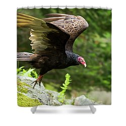 Shower Curtain featuring the photograph Turkey Vulture by Mircea Costina Photography