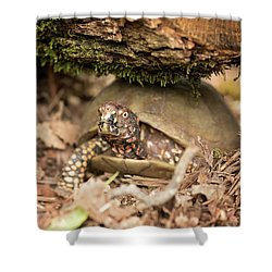 Turtle Town Shower Curtain