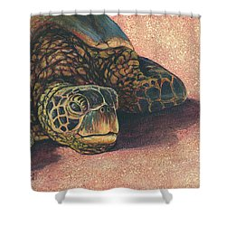 Shower Curtain featuring the painting Honu At Rest by Darice Machel McGuire