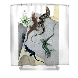 Varieties Of Wall Lizard Shower Curtain