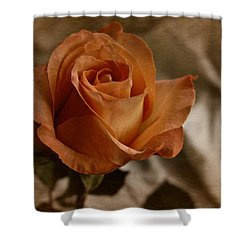 Vintage Orange Rose Shower Curtain by Richard Cummings