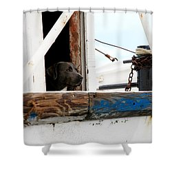 Waiting On His Best Friend Shower Curtain by Toni Hopper