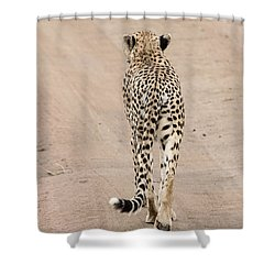 Shower Curtain featuring the photograph Walking Away by Pravine Chester