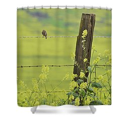 Warbler In The Meadow Shower Curtain