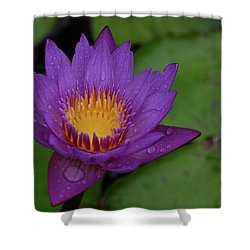 Water Lily Shower Curtain by Ronda Ryan