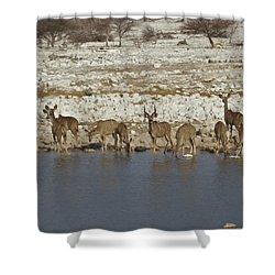 Waterhole Kudu Shower Curtain by Ernie Echols