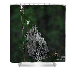 Shower Curtain featuring the photograph Webs We Weave by Skip Willits