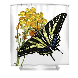 Western Tiger Swallowtail On A Western Wallflower Shower Curtain