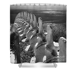 Whale Bones In Black And White Shower Curtain