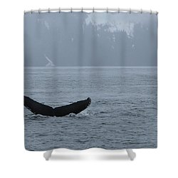 Shower Curtain featuring the photograph Whale Fluke by Brandy Little