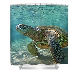 What Are You Lookin At Shower Curtain by James Roemmling