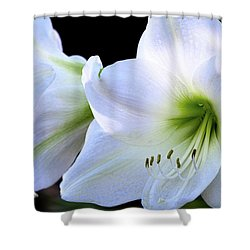Shower Curtain featuring the photograph White Amaryllis  by Saija Lehtonen