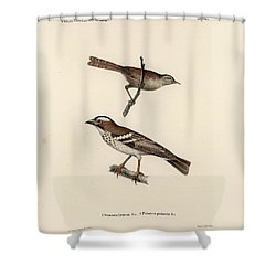 White-browed Sparrow-weaver And Grass Or Bush Warbler Shower Curtain