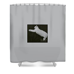 White Cat Logo Shower Curtain by Sobajan Tellfortunes