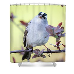 Shower Curtain featuring the photograph White-crowned Sparrow  by Ricky L Jones
