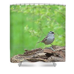 White Crowned Sparrow Shower Curtain by Rosanne Jordan