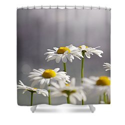 White Daisies Shower Curtain by Carlos Caetano