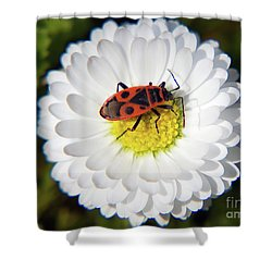 Shower Curtain featuring the photograph White Flower by Elvira Ladocki