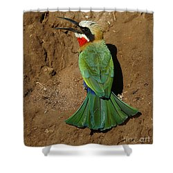 White Fronted Bee-eater Shower Curtain