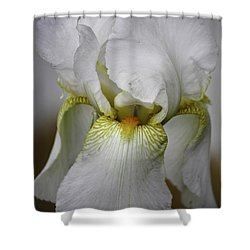 White Iris Shower Curtain by Teresa Mucha