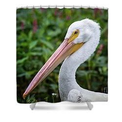 White Pelican Shower Curtain by Robert Frederick