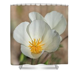 Shower Curtain featuring the photograph White Poppies  by Saija Lehtonen
