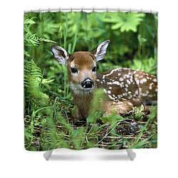 Shower Curtain featuring the photograph White-tailed Deer Odocoileus by Konrad Wothe