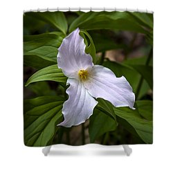 White Trillium Shower Curtain by Tyson and Kathy Smith