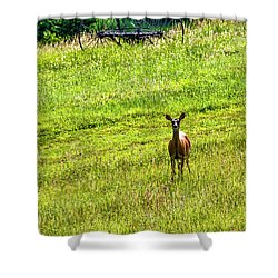 Shower Curtain featuring the photograph Whitetail Deer And Hay Rake by Thomas R Fletcher