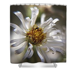 Wild Aster Shower Curtain by Yumi Johnson