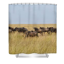 Wild Beasts Shower Curtain